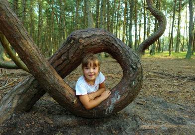 """Der """"Tanzende Wald"""" auf der Kurischen Nehrung"""