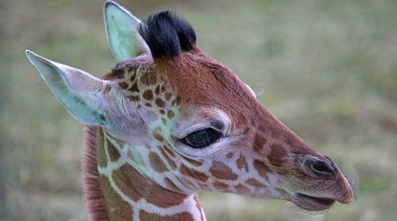 SOS-Ruf aus dem Tierpark
