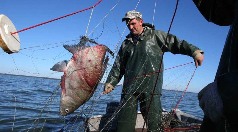 Zertifikate für Exportware Fisch