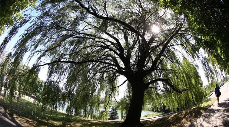 Stadt schützt ihre Parks