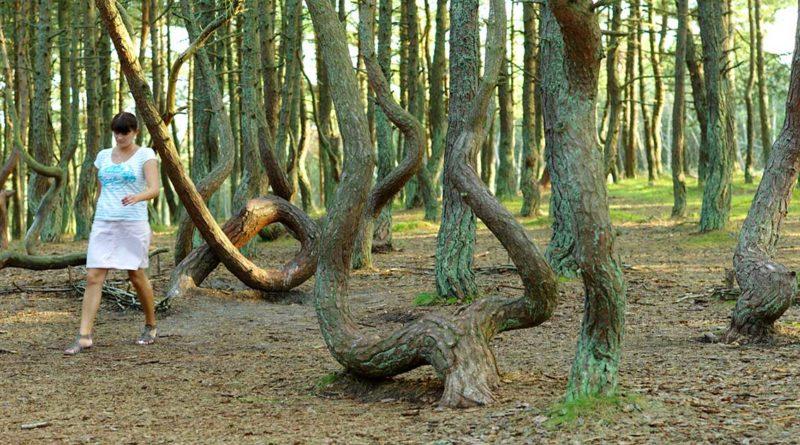 Pilzverbot im Tanzenden Wald auf der Nehrung