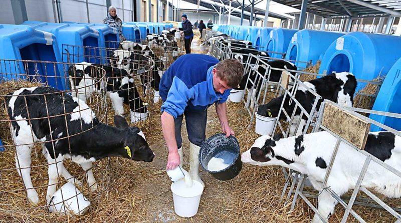 Milchwirtschaft im Aufwind