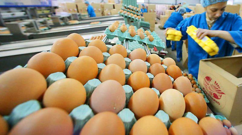 Hühnereier um 25 % teurer