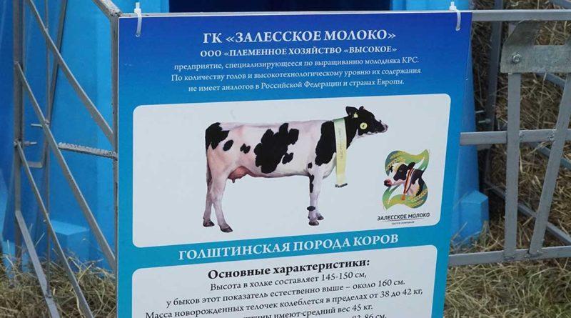 Neue Molkerei für Butter und Milchpulver